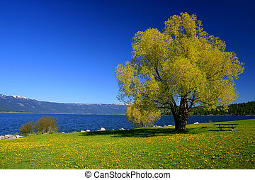 Down By The Lake - Spring day on Cascade Lake,Valley County...