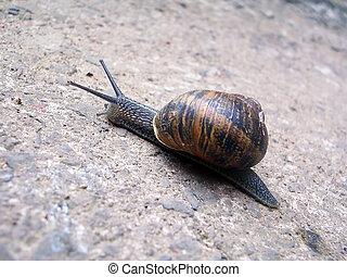 Snail climbs up hill