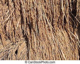 Rice stack detail