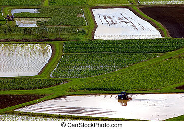 working taro - tractor in flooded field with patterns of...