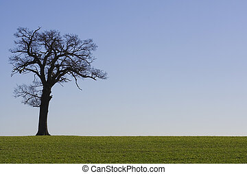 Tree Horizon 2 - An old tree on the horizon with a cloudless...
