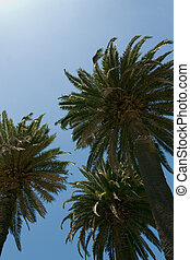 Palm Paradise - Trio of palm trees against a tropical blue...