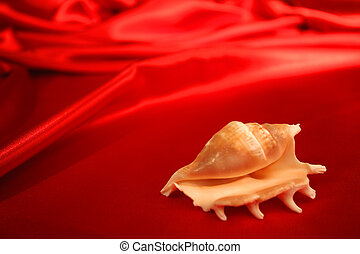 Seashell on red - A seashell on red, silk cloth.