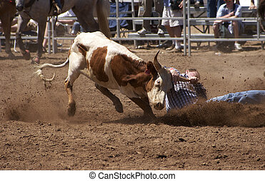 Steer Wrestling - hanging onto a steer