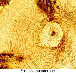 Age rings of Wood. abstract textured background