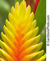 Tropical plant - close up of tropical plany