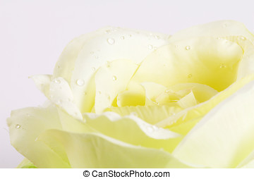 Silk flower - Single soft yellow silk flower with fake...