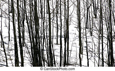 Linear - Winter linear abstract of trees in winter