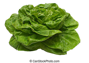 Butterhead Lettuce - Lettuce isolated on white File contains...
