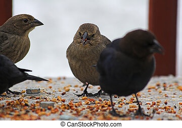 Birds eat seeds - bird looking for food on a cold winter day