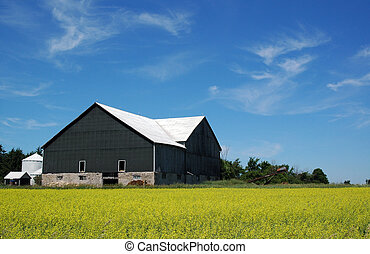 Barn with canola - Barn near Orangeville, ON, next to field...