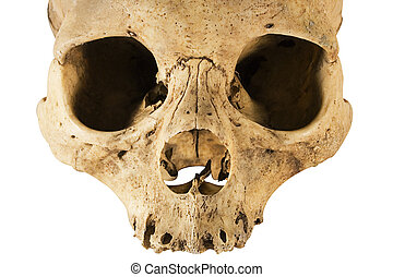 Skull (Front) - A human Skull. File contains clipping path.