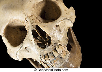 Skull (Diagonal) - A human Skull. File contains clipping...