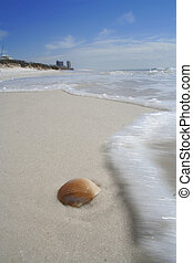 shell surf - orange seashell and surf with blue sky and...