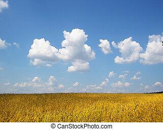 a field of wheat in ukraine