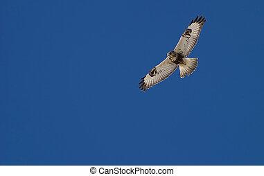 falcão, caça