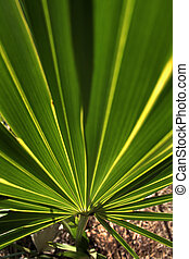palm frond - close-up of bright green palm frond