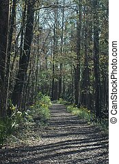 Nature Path - A hiking trail through the cypress swamp near...