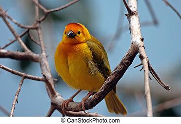 Cute Finch - Cute finch perched in a tree.
