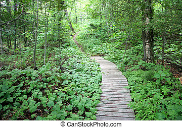 Path in the Woods - Path in the woods near Wakefield,...