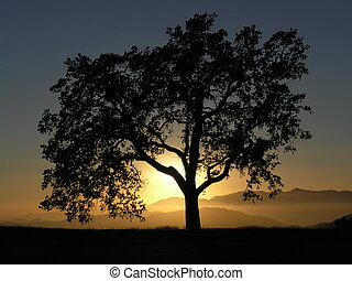 California Oak Sunse - Oak tree against sunset on mountain