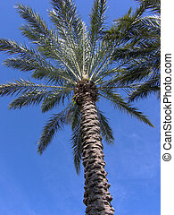 Florida Palm Tree - underneath a tropical florida palm tree