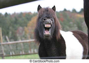 pony-mouth - This is our pony Kimba I like it to photograph...