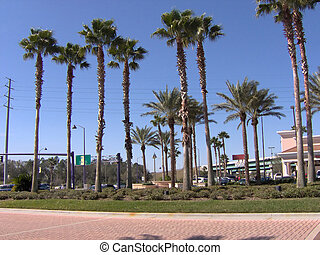 FL Tall Palms - Some Florida tall palm trees.
