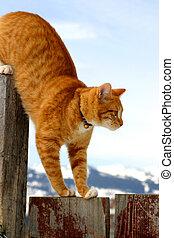 Stalker 2 - on the prowl