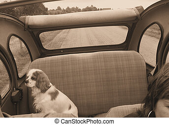 Cavalier enjoying th - King Charles Spaniel on the backseat...