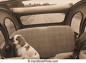 Cavalier enjoying th - King Charles Spaniel on the backseat...