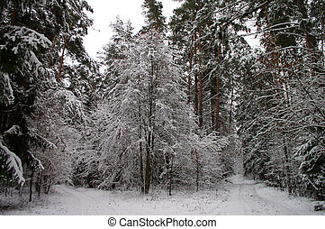 Winter Scene - Winter in the forest