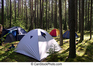 Tents in the Forest - Summertime - tents in a forest