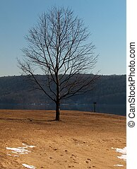 Standing Alone - This lone tree stands all by itself What a...
