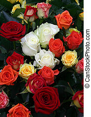 a lot of roses - Varicoloured roses