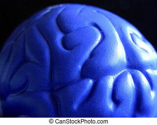 Blue Brain - Plastic representation of the cerebral cortex...