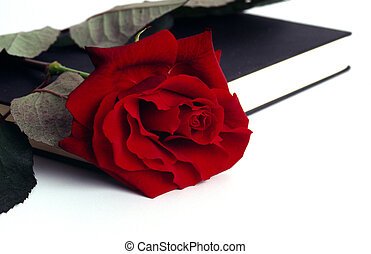 book and rose - stillife with book and rose, nature and...