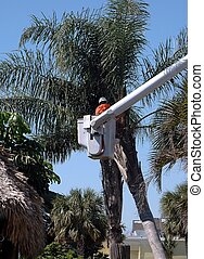 Tree Trimmer - Photographed tree trimmer in Florida. version...