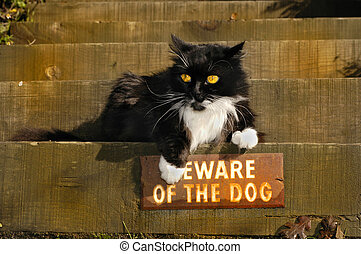 "Defiant Kitty - A bold cat ignores the \\\""Beware of..."