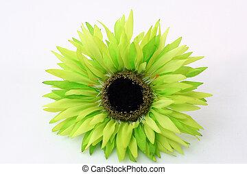 daisy - colorful daisy