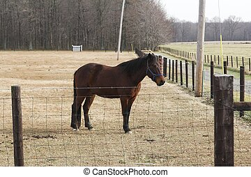 a Horse in pasture - Brown horse in fenced pasture land