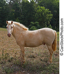 a white horse - White horse in fenced pasture land