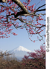 Plum Blossoms III - Mount Fuji with red plum blossoms