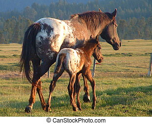 Appaloosa Sunset - Mare and colt