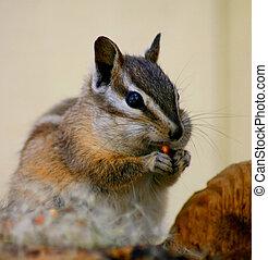 Alvin - Chipmunk