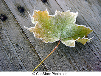 Maple leaf - Autumn, morning, frost