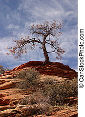 Lone Tree - Tree at Zion National Park
