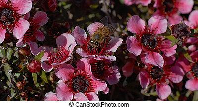 Bee Amongst Flowers Macro