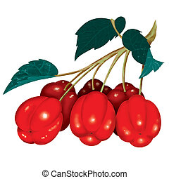 Acerola - This citric fruit have a very beautiful color and...