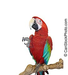 Blue Wing Red Macaw - Take my Four, and Give me Five